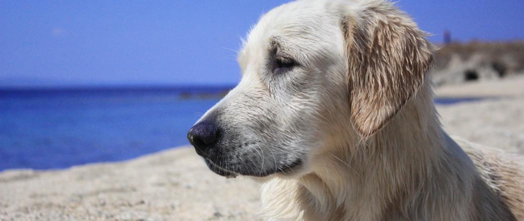 Jak podróżować z psem i nie zwariować? 10 dobrych rad
