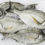 Jak rozpoznać świeżą rybę? 8 oznak świeżości (lub rozkładu)