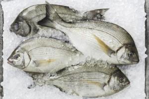 swieze ryby2