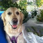 Jak wychować psa? 5 dobrych rad plus 1 gratis