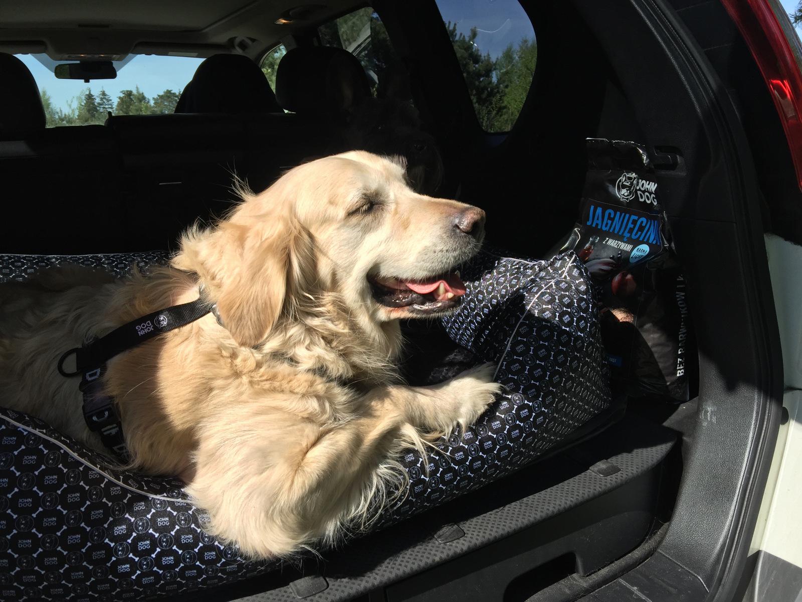karmienie psów fakty i mity