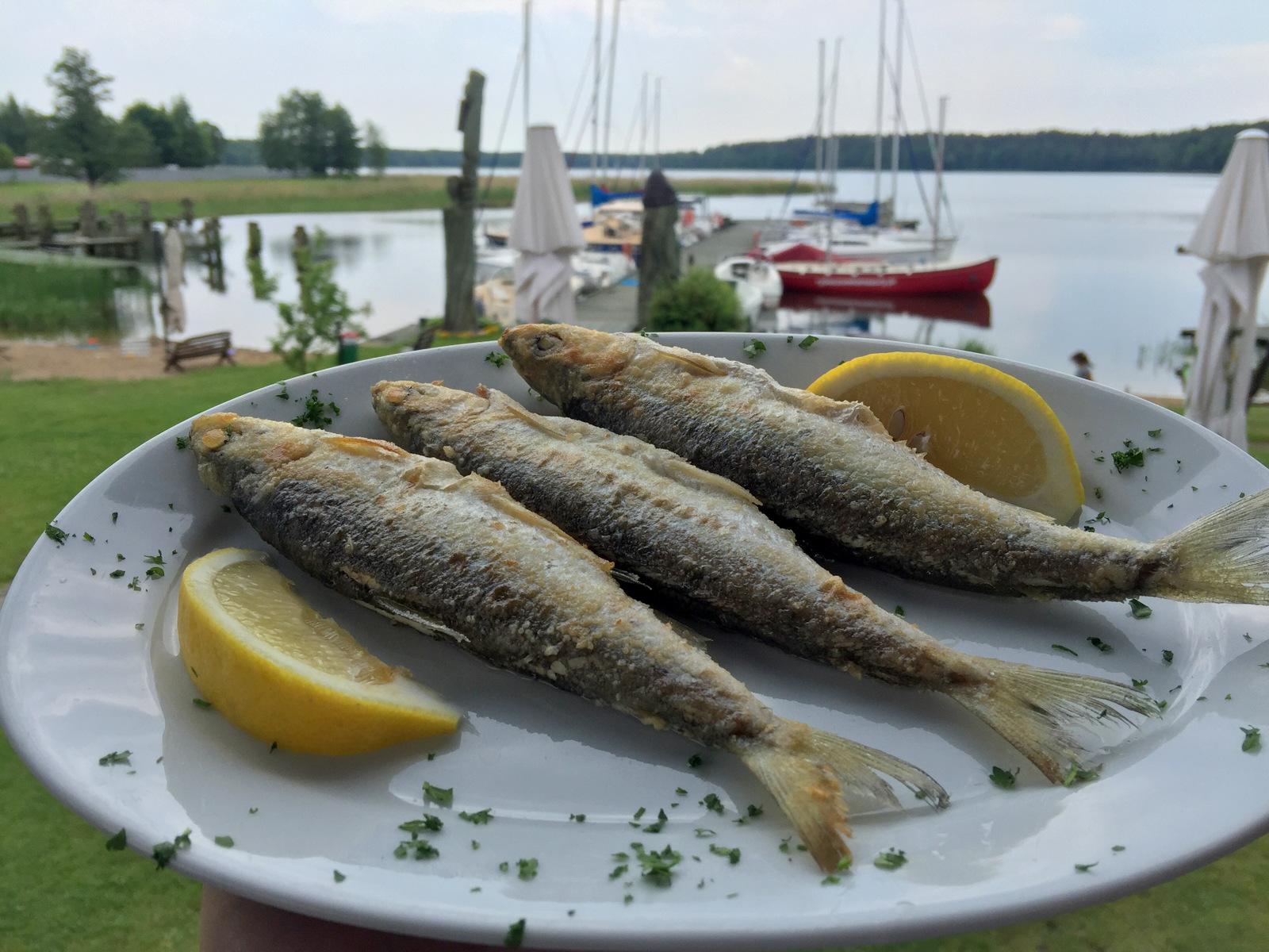 mazury gdzie na rybe