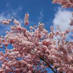 Japonia za 12 zł (dzidziutek gratis) – jak to zrobić?