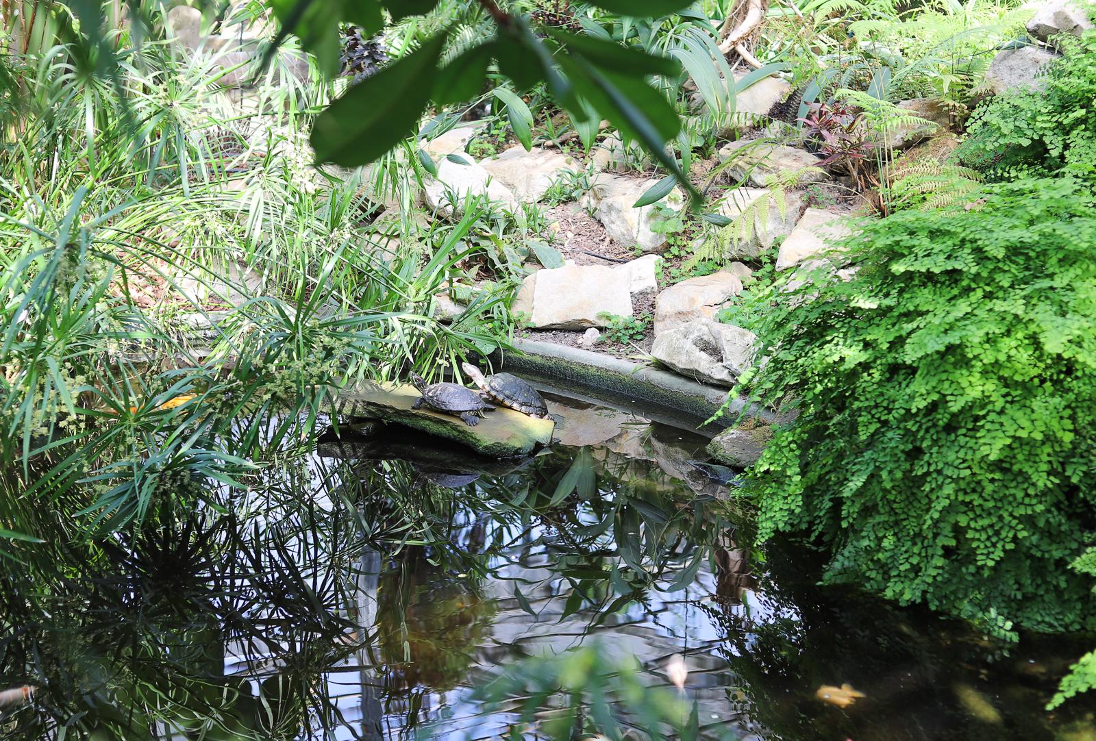 ogrod botaniczny pan powsin